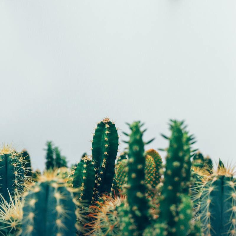 cactus espinas